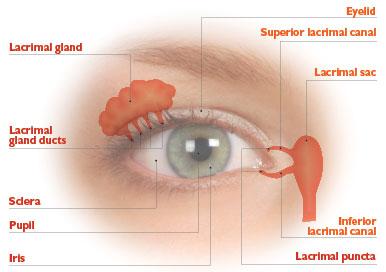 Uncomfortable Dry Eyes Rand Eye Institute
